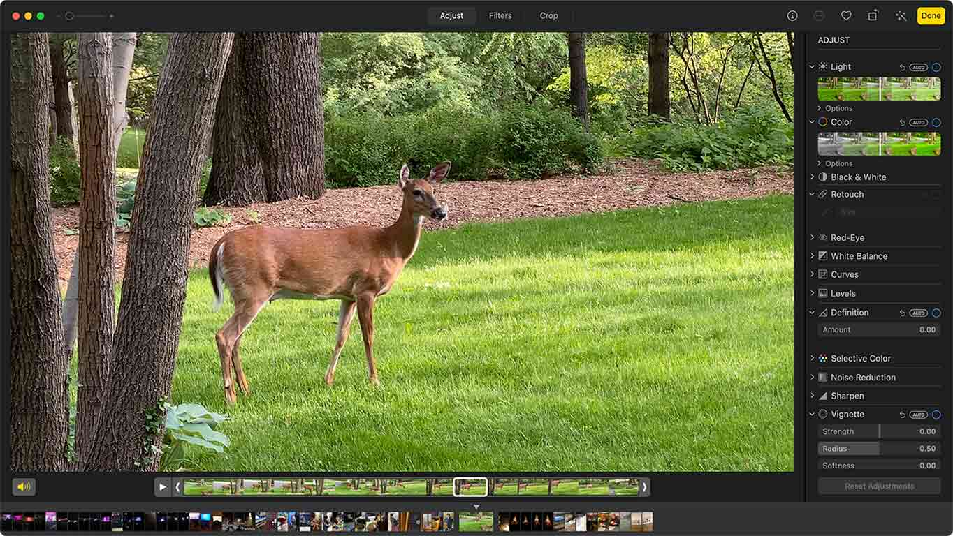 white-tailed deer in green grass