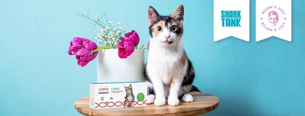 Cat on table with blue background - Base Paws DNA Test Kit
